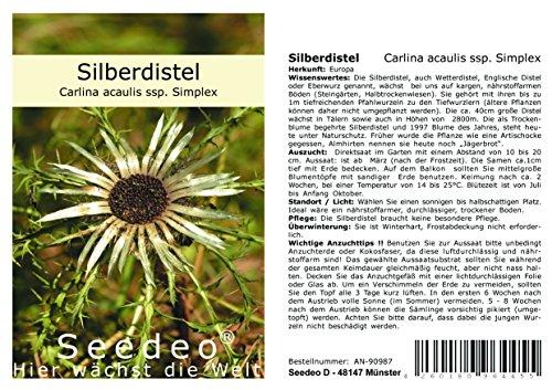 Seedeo® Silberdistel (Carlina acaulis ssp. Simplex) 30 Samen