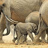 Image de Elephant Families 2016