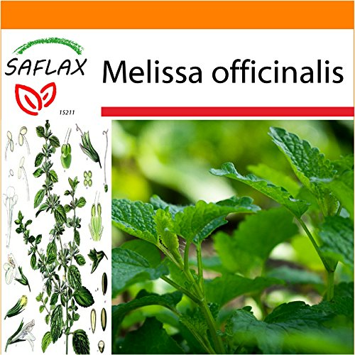 SAFLAX - Garden in the Bag - Erba limoncina - 150 semi - Melissa officinalis