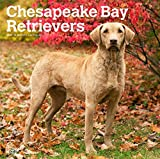 Chesapeake Bay Retrievers 2019 - 18-Monatskalender mit freier DogDays-App: Original BrownTrout-Kalender [Mehrsprachig] [Kalender]