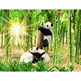 Fototapeten Panda Tiere 352 x 250 cm - Vlies Wand Tapete Wohnzimmer Schlafzimmer Büro Flur Dekoration Wandbilder XXL Moderne Wanddeko - 100% MADE IN GERMANY - 9332011a