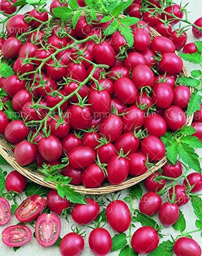 HOO PRODUITS - 100pcs / sac de graines de tomate graines de tomates cerises graines végétales NO OGM pour plantes sanitaire des aliments pour le jardin de la maison pas cher!