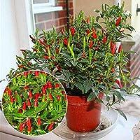 ScoutSeed 50 Unids Thai Sun Pimiento Picante Pimienta Annuum Chili Semillas Plantas Bonsai Ornamentales