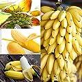 Yukio Samenhaus - Tropisch Bonsai Bananensamen Zwerg Bananenbaum Zimmerpflanzen Obstsamen Essbar Saatgut Keimfähig winterhart von Yukio auf Du und dein Garten