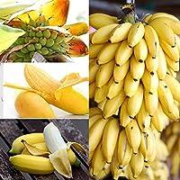 Coorun 10/20/30/50/100 Stücke Banane Samen Mini Bonsai, exotische Hausgarten Obst Bäume Outdoor Obst Samen für Garten Pflanzen (100 Teile/paket)
