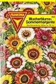 Wucherblume, Sommermargerite, Chrysanthemum carinatum, ca. 200 Samen von Philipp Klein GmbH auf Du und dein Garten