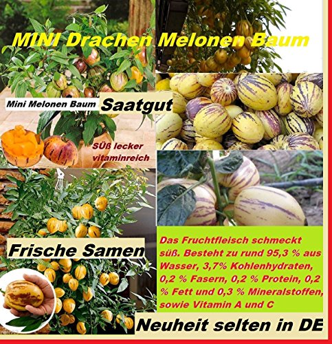 20x-mini-ch-dragon-melones-arbol-centro-de-atencion-planta-rareza-fruta-nuevo-2016-164