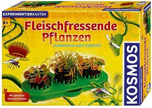Venusfliegenfalle Dionaea, Venusfliegenfalle