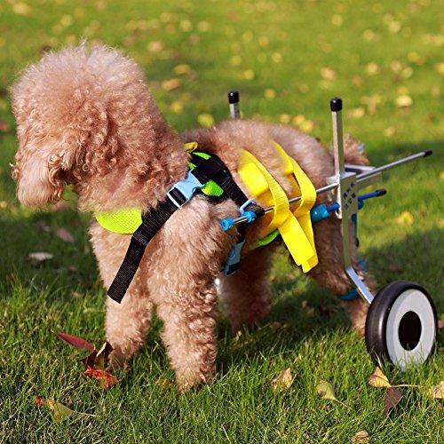 61USvWgL6dL - Teabelle - Silla de Ruedas Ajustable para Perro, para rehabilitación de piernas para Perros pequeños con minusvalía, Perros y Cachorros (2 Ruedas)