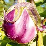 Aubergine Rosa Bianca - Eierfrucht - 20 Samen