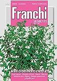 Kräutersamen - Majoran Gentile von Franchi Sementi