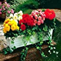 Beet Dahlien Unwin Mischung von Meingartenshop - Du und dein Garten