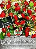 Monatserdbeeren SPERLI´s Bowlenzauber