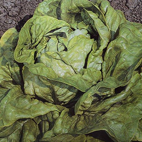 Laitue pommée Kagraner - 4 sacs de graines