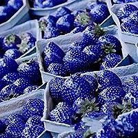 Portal Cool 2818 100Pcssweetbluestrawberryantioxidantseedsnutritious Delicious Berry Seed