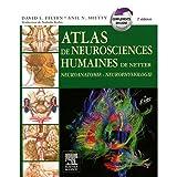 Image de Atlas de neurosciences humaines de Netter