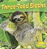 Three-Toed Sloths (Up a Tree)