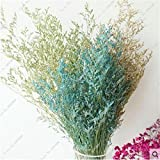 Semilla de semillas de pasto perenne Bonsai Flor de San Valentín jardín de hermosas flores secas de la planta de interior en maceta ornamental 150 PC 3