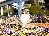 Marlii Hundebürste | Katzen-Bürste | Premium Wohlfühl Unterfell-Bürste für Mittel bis Langhaar | Enthaarungs- & Entfilzungs- Bürste | Massage Hundekamm für gesundes & strahlendes Fell | 100% Marlii-Zufriedenheitsgarantie + Gratis Fellpflege E-Book - 5