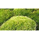 sphagnum musgo, suelo para reptiles en terrario (6 bolas) musgo antibacteriano