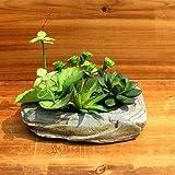 Mini giardino di piante grasse finte DA0006