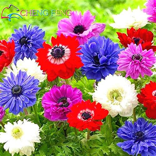 Chine Fleur Graines 50pcs / lot Anemone Pulsatilla Graines Bonsai Mini Belle Usine Cadeau Diy Homes Jardin Jardinière