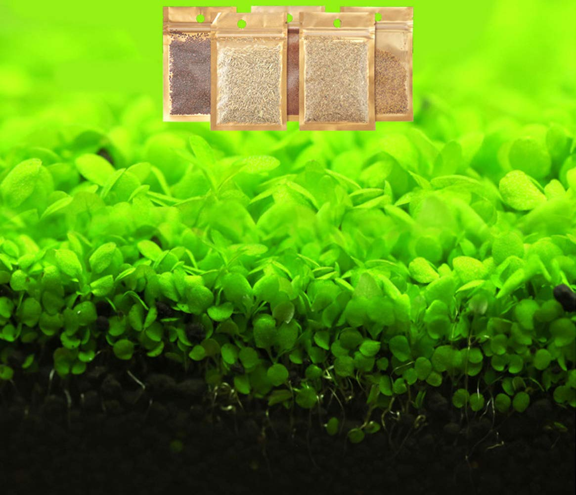 Aquarium Grass Plants Seeds,Aquatic Double Leaf Carpet Water Grass,Oxygenating Weed Live Pond Plant Seeds,Fish Aquatic…