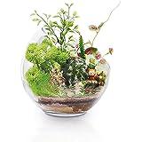 Soporte de cristal grande para plantas de aire de terrario, 17,78 x 17,8 cm, gran apertura de cristal, mini cuenco para decor