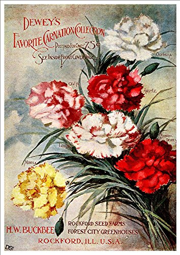 hwbuckbee-deweys-favorite-carnation-collection-a4-glossy-art-print-taken-from-a-beautifully-illustra