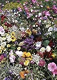 Tropica - Wildblumen - Südengland Cottage Garden (34 Sorten) - 1000 Samen