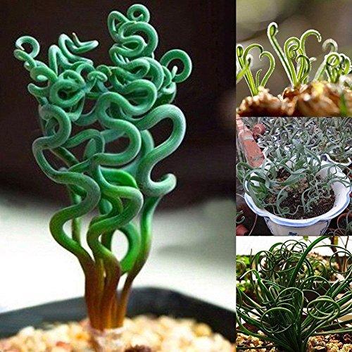 Cactus e piante grasse da interno