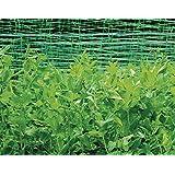 GREEN TOWER FILET POUR PLANTES GRIMPANTES 10X2 M 141096