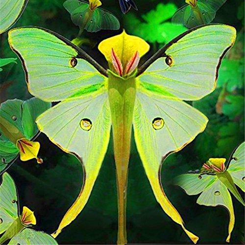Tomasa Samenhaus- 100 stücke Phalaenopsis Orchidee Samen Bonsai Seltene Orchidee Blumensamen Zierpflanzen Indoor Garten