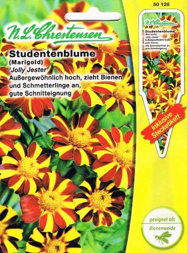 Studentenblume 'Jolly Jester' außergewöhnlich hoch, zieht Bienen und Schmetterlinge an ( mit Stecketikett) 'Tagetes patula'