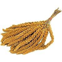 VERSELE-LAGA Millet Anjou,