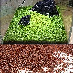 Kicode Semi di piante acquatiche Erba Acqua Muschio Paesaggio Decorazione del laghetto Acquario(1 Pack) Erba Acqua Muschio Paesaggio Decorazione del laghetto Acquario