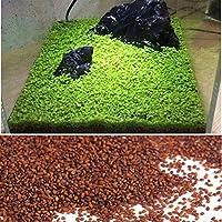 Kicode Graines aquatiques végétales Herbe d'eau Mousse Paysage Décoration d'étang Aquarium