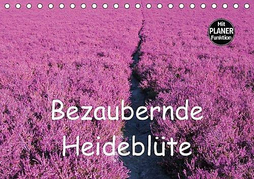 bezaubernde-heideblute-tischkalender-2017-din-a5-quer-bluhende-heidelandschaften-in-deutschland-und-