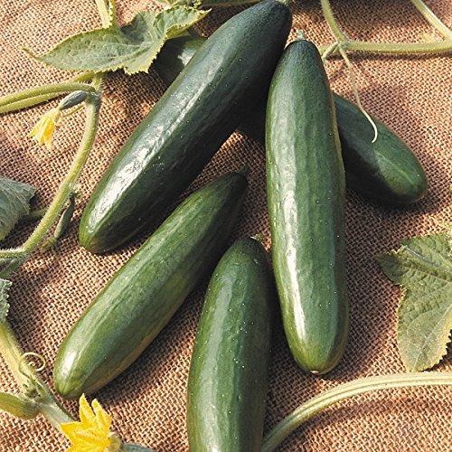 kings-seeds-cucumber-la-diva-25-seeds