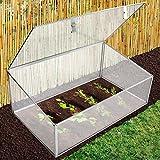 Mini-serre de jardin casa pura® Planta   en polycarbonate résistant + incassable   stabilisé UV, résistant aux intempéries   100x60x40cm