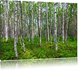 Birkenwald Format: 120x80 cm auf Leinwand, XXL riesige Bilder fertig gerahmt mit Keilrahmen, Kunstdruck auf Wandbild mit Rahmen, günstiger als Gemälde oder Ölbild, kein Poster oder Plakat