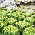 50 Stück Samen Seltene Einfache Wassermelonen Samen, Obst, Wasser-Melone-Samen-Hausgarten von Buckdirect Worldwide Ltd. auf Du und dein Garten