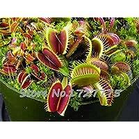 Nueva llegada jardín de 20 semillas Semillas de Venus Fly Trap Dionaea de la planta carnívora Muscipula
