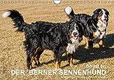 So ist er. Der Berner Sennenhund (Wandkalender 2018 DIN A4 quer): Eine nicht ernst zu nehmende Charakteranalyse des Berner Sennenhundes [Kalender] [Apr 13, 2017] Hunscheidt, Hubert