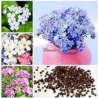 Vergissmeinnicht Sylvia Weiß Vergiss-mich-nicht Blumen 100 Samen