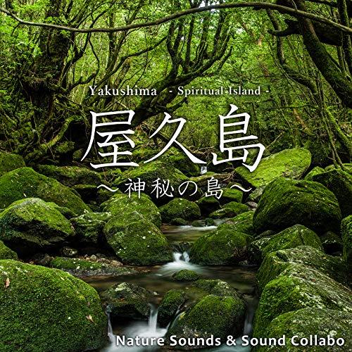 Singing Bird -Wren-, Yakushima, Japan