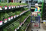 Donna Jean Rueff shopping for tomato plants at Lowe's Home Improvement Store in Columbus, Indiana U.S.A. on 5-8-2017 A.D. (English Edition)