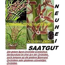 25x Cymbidium Floribundum Orquídeas Semillas Flor Planta Rareza Orquídeas De Kahn #31