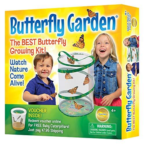 Insect Lore Lernspiele - Kit für die Zucht von Schmetterlingen