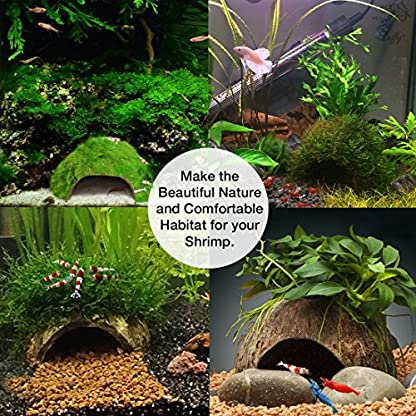 SunGrow Coco Shrimp Cave, 5x3 Inches, Coco Hut, Comfortable Hideout for Crustaceans, Perfect Breeding Area, Promotes… 4